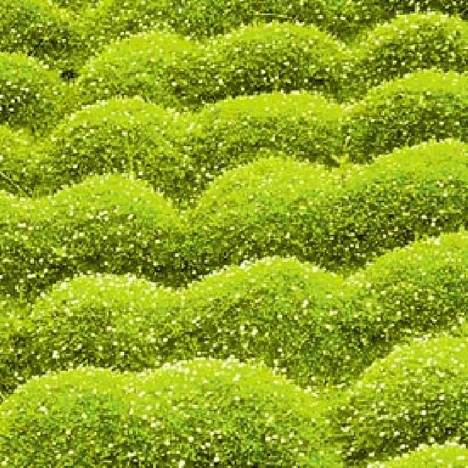 Japanse bodembedekkers