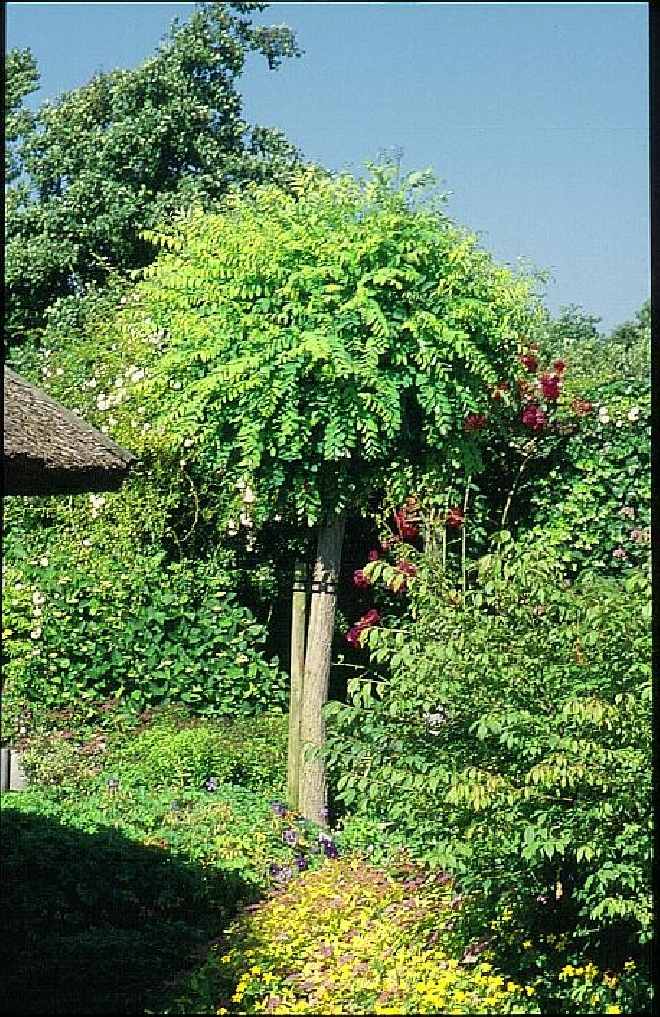 bomen kopen zuid holland